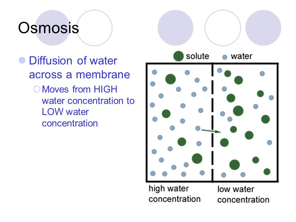 Osmosis Diffusion of water across a membrane  Moves from HIGH water concentration to LOW water concentration