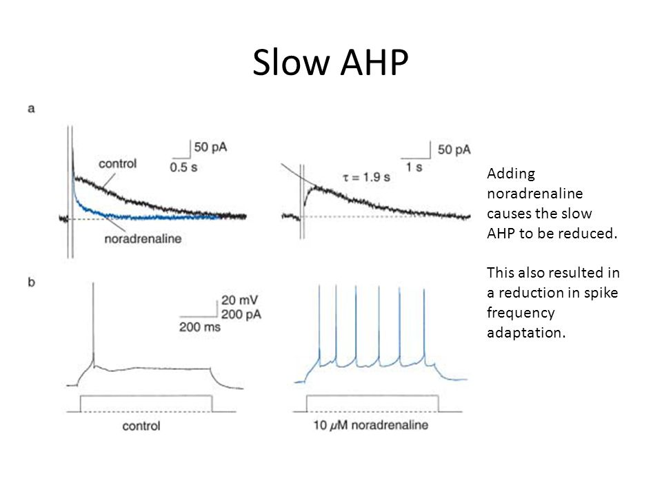 Slow AHP Adding noradrenaline causes the slow AHP to be reduced.