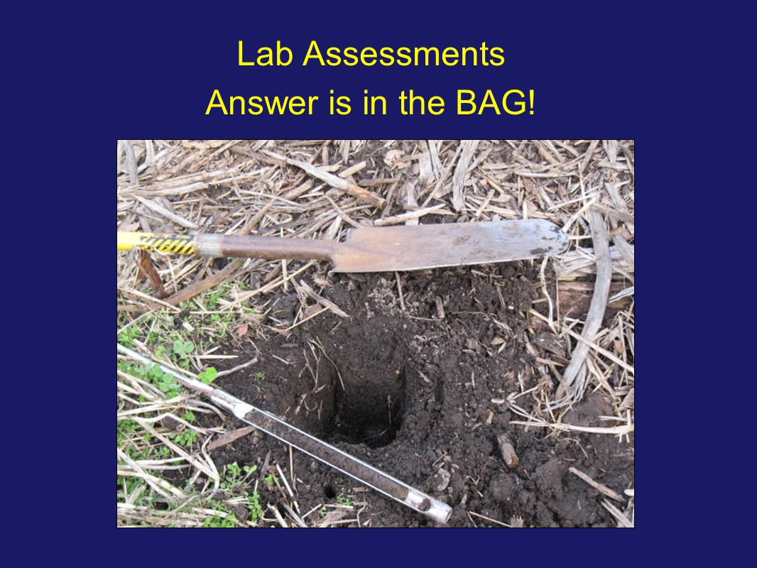 Lab Assessments Answer is in the BAG!