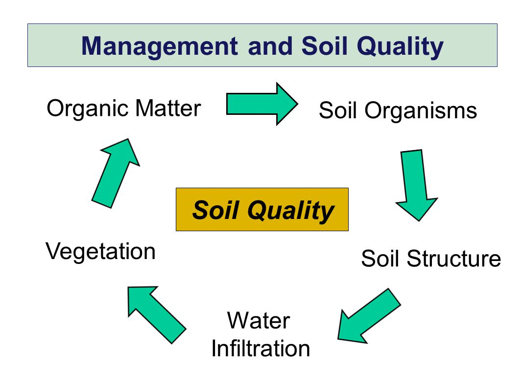Management and Soil Quality Soil Organisms Soil Structure Organic Matter Water Infiltration Vegetation Soil Quality
