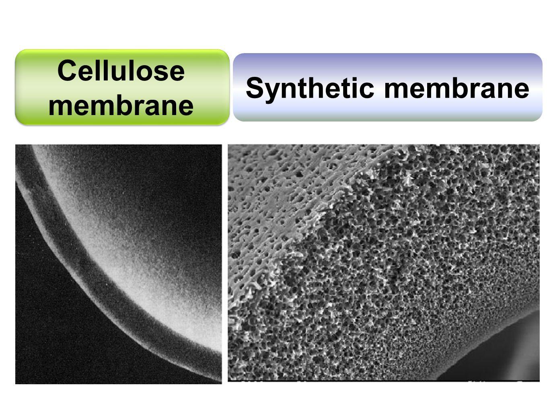 Synthetic membrane Cellulose membrane