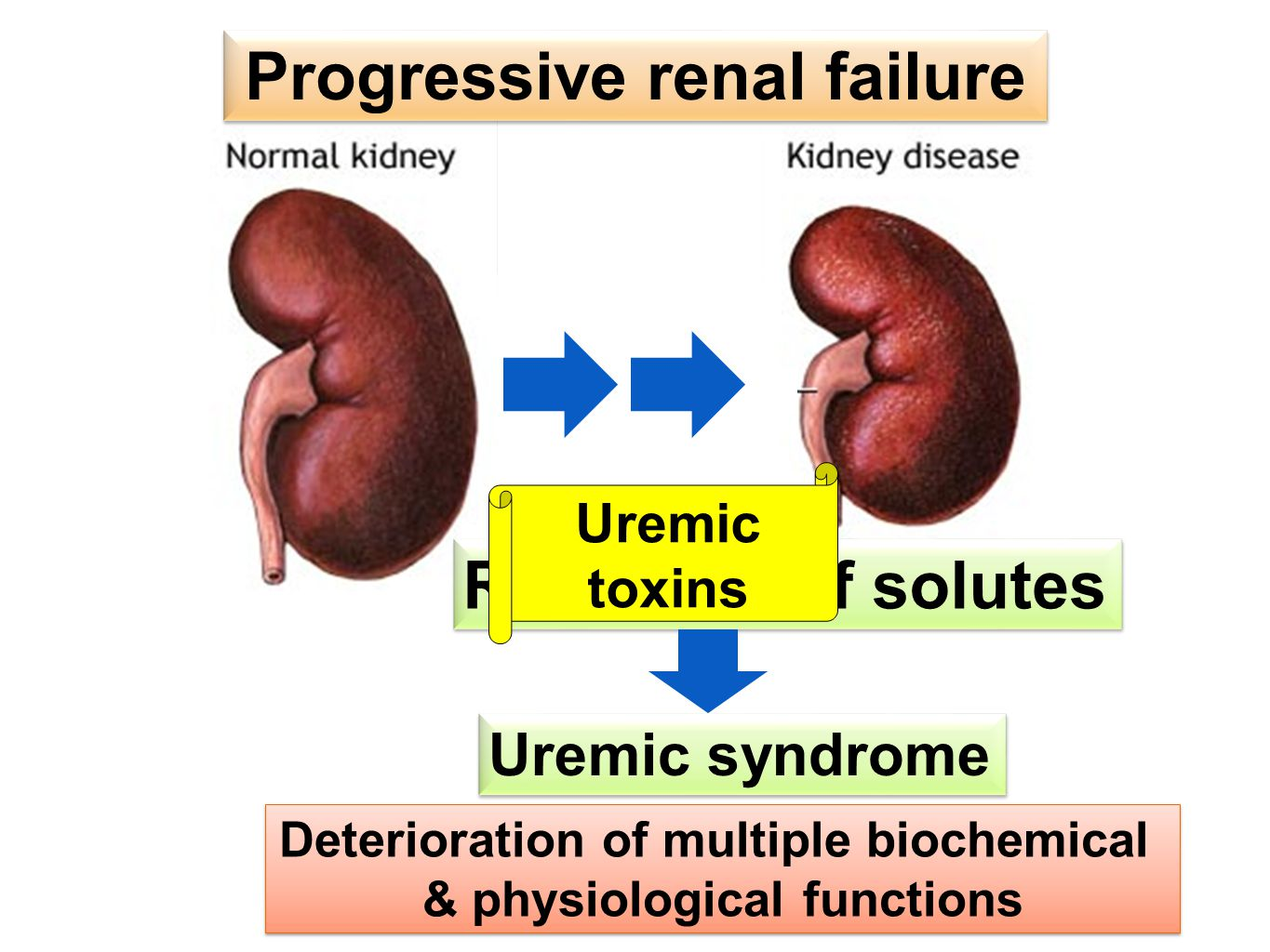 Retention of solutes Uremic syndrome Deterioration of multiple biochemical & physiological functions Deterioration of multiple biochemical & physiological functions Progressive renal failure Uremic toxins