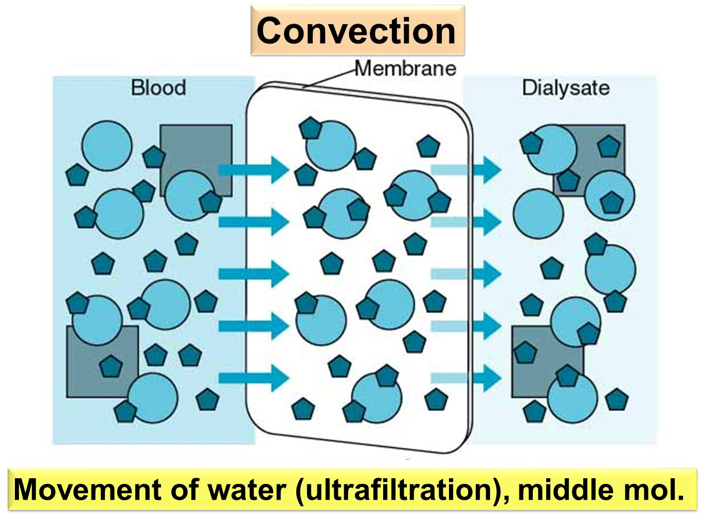 Movement of water (ultrafiltration), middle mol. Convection