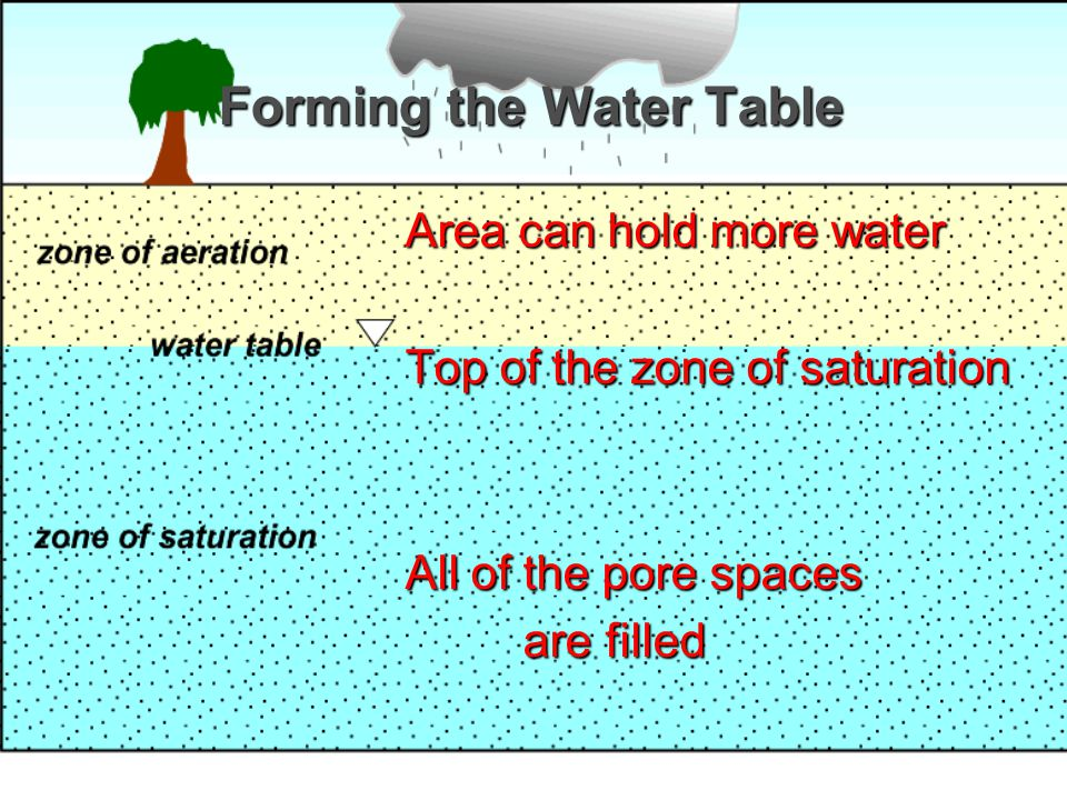 Forming the Water Table Area can hold more water Area can hold more water Top of the zone of saturation Top of the zone of saturation All of the pore spaces All of the pore spaces are filled are filled