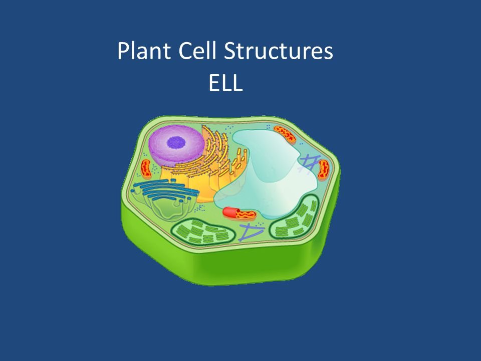 Plant Cell Structures 1.Mitochondria2.Chromosome 3.
