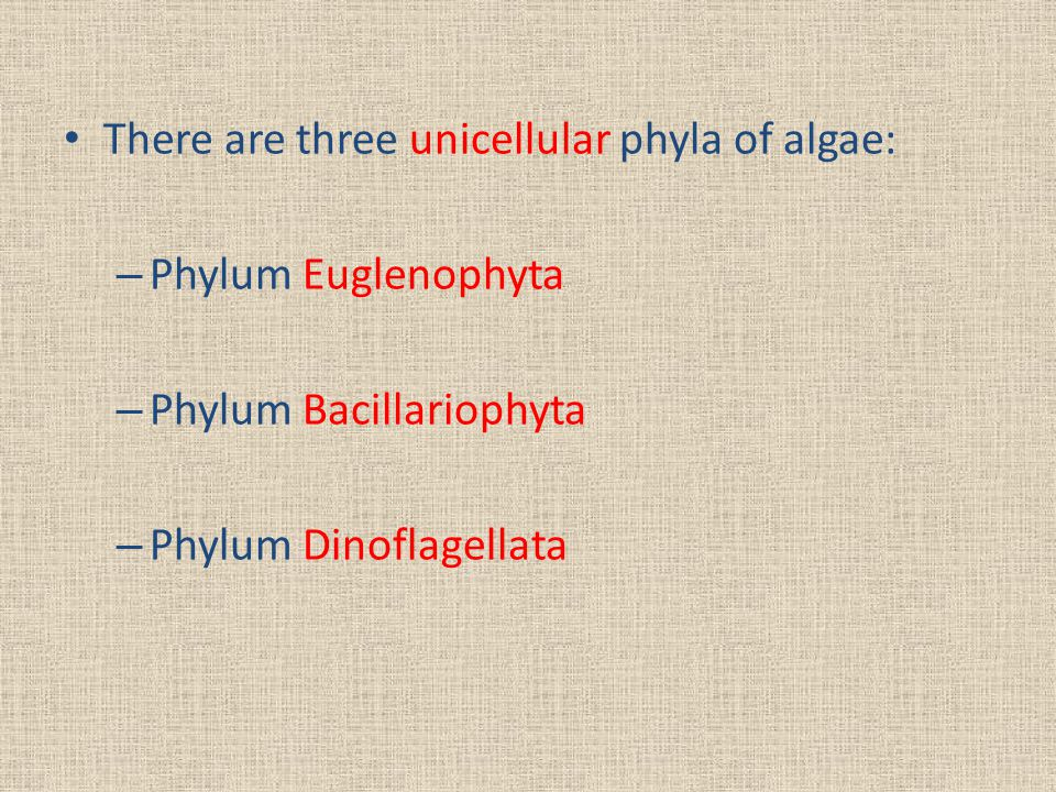 There are three unicellular phyla of algae: – Phylum Euglenophyta – Phylum Bacillariophyta – Phylum Dinoflagellata