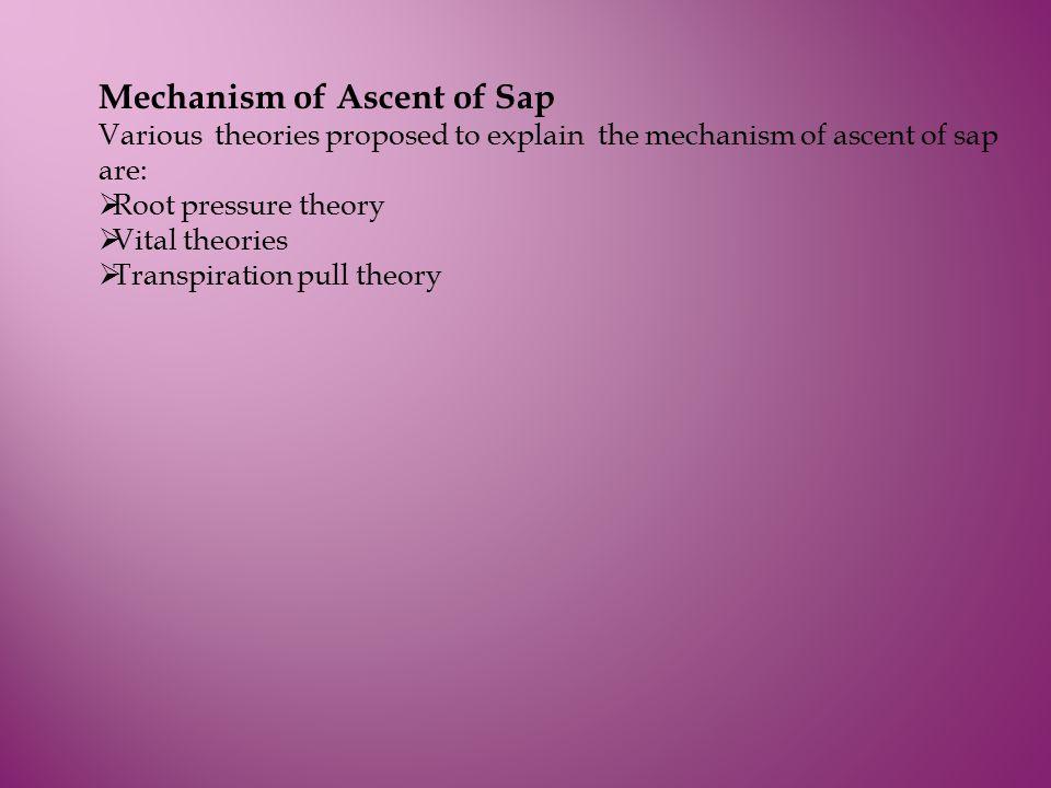 Mechanism of Ascent of Sap Various theories proposed to explain the mechanism of ascent of sap are:  Root pressure theory  Vital theories  Transpir