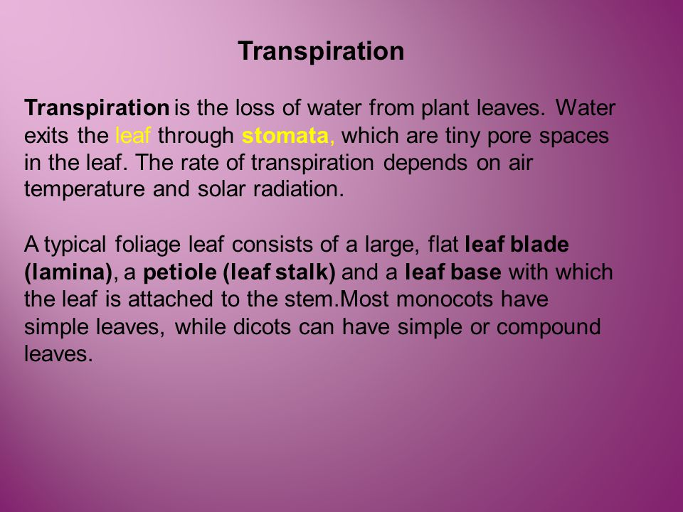 Transpiration Transpiration is the loss of water from plant leaves. Water exits the leaf through stomata, which are tiny pore spaces in the leaf. The