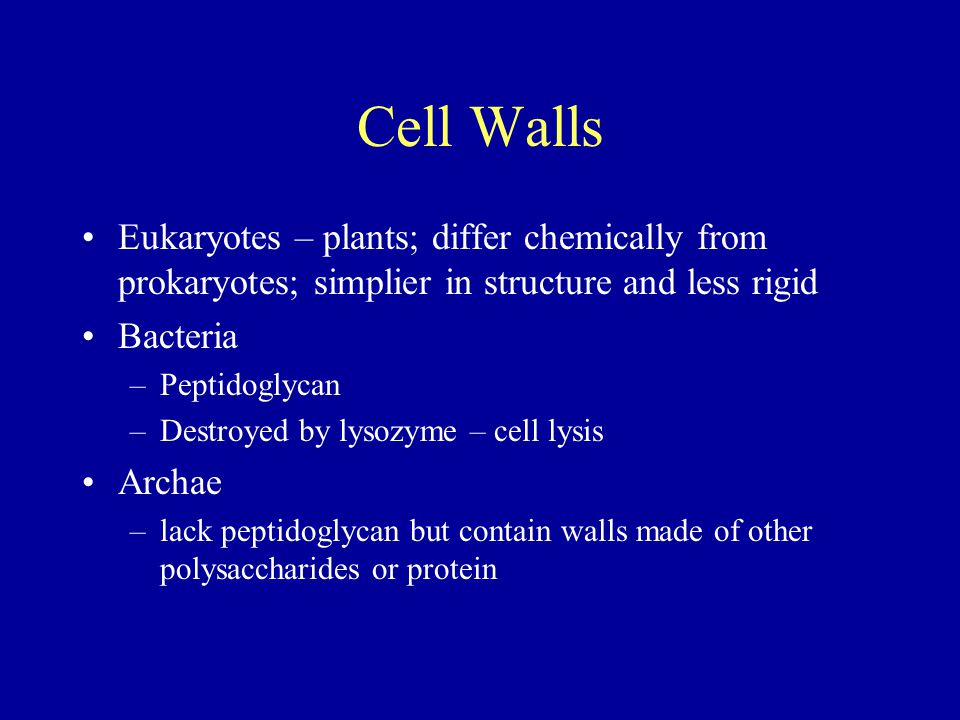 Cell Walls Eukaryotes – plants; differ chemically from prokaryotes; simplier in structure and less rigid Bacteria –Peptidoglycan –Destroyed by lysozym