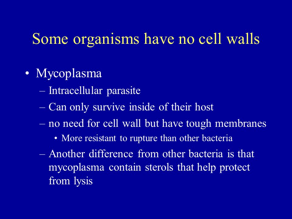 Some organisms have no cell walls Mycoplasma –Intracellular parasite –Can only survive inside of their host –no need for cell wall but have tough memb