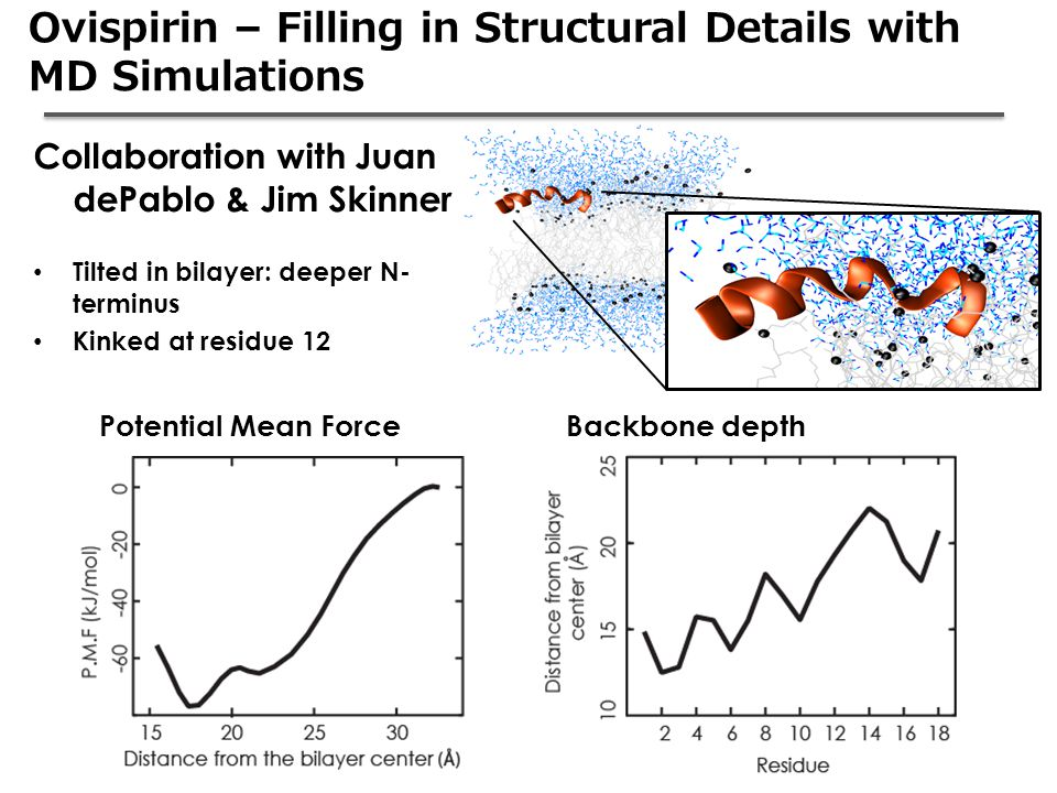 Ovispirin – Filling in Structural Details with MD Simulations Backbone depthPotential Mean Force Collaboration with Juan dePablo & Jim Skinner Tilted in bilayer: deeper N- terminus Kinked at residue 12