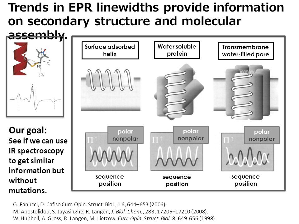 Trends in EPR linewidths provide information on secondary structure and molecular assembly. G. Fanucci, D. Cafiso Curr. Opin. Struct. Biol., 16, 644–6