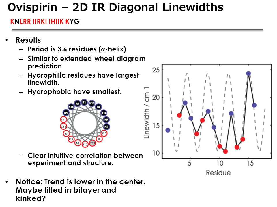 Ovispirin – 2D IR Diagonal Linewidths KNLRR IIRKI IHIIK KYG Results – Period is 3.6 residues ( α -helix) – Similar to extended wheel diagram predictio