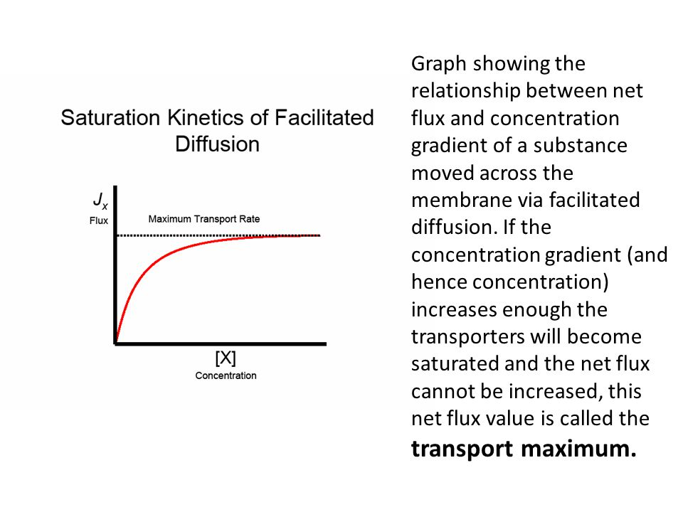 Graph showing the relationship between net flux and concentration gradient of a substance moved across the membrane via facilitated diffusion. If the