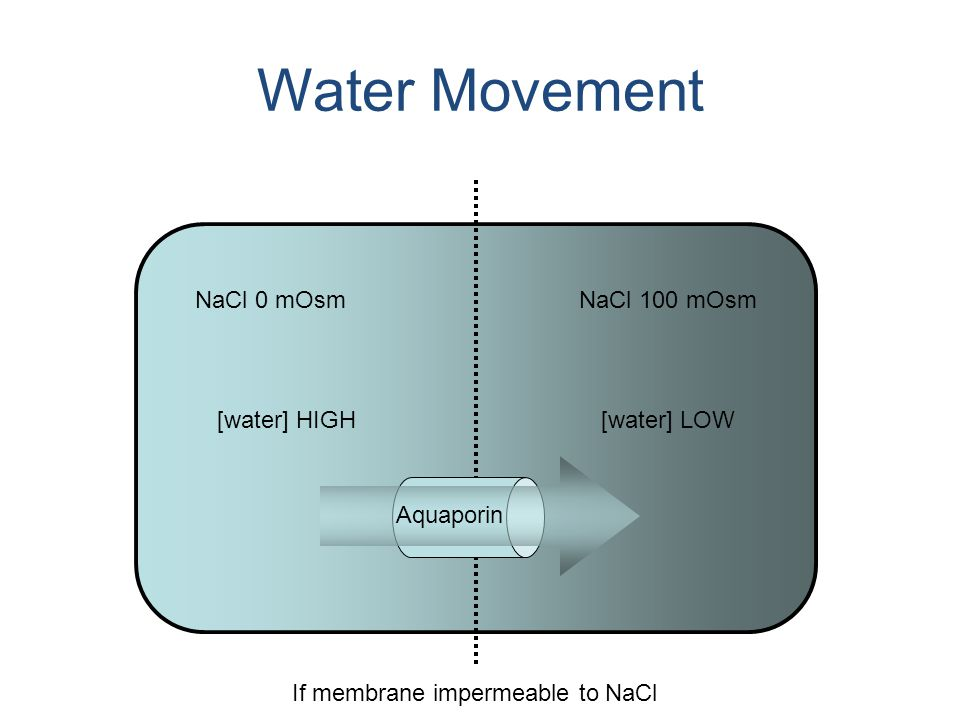 Water Movement NaCl 0 mOsmNaCl 100 mOsm [water] HIGH[water] LOW If membrane impermeable to NaCl Aquaporin