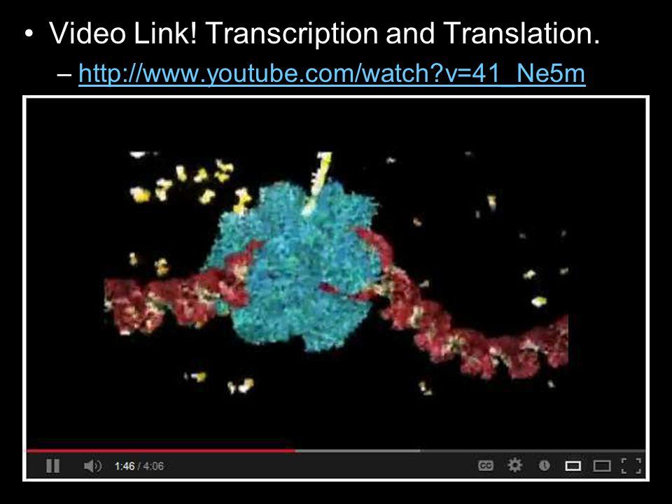 Video Link. Transcription and Translation.