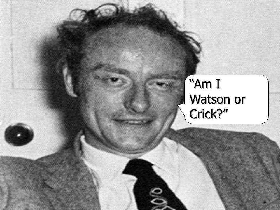 Am I Watson or Crick