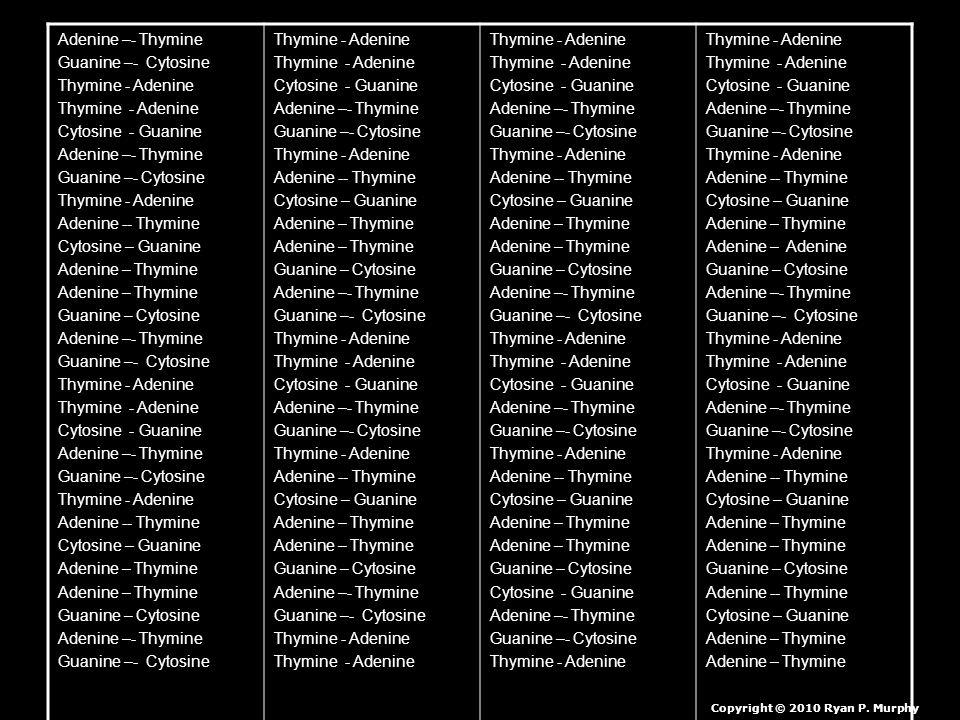 Adenine –- Thymine Guanine –- Cytosine Thymine - Adenine Cytosine - Guanine Adenine –- Thymine Guanine –- Cytosine Thymine - Adenine Adenine -- Thymine Cytosine – Guanine Adenine – Thymine Guanine – Cytosine Adenine –- Thymine Guanine –- Cytosine Thymine - Adenine Cytosine - Guanine Adenine –- Thymine Guanine –- Cytosine Thymine - Adenine Adenine -- Thymine Cytosine – Guanine Adenine – Thymine Guanine – Cytosine Adenine –- Thymine Guanine –- Cytosine Thymine - Adenine Cytosine - Guanine Adenine –- Thymine Guanine –- Cytosine Thymine - Adenine Adenine -- Thymine Cytosine – Guanine Adenine – Thymine Guanine – Cytosine Adenine –- Thymine Guanine –- Cytosine Thymine - Adenine Cytosine - Guanine Adenine –- Thymine Guanine –- Cytosine Thymine - Adenine Adenine -- Thymine Cytosine – Guanine Adenine – Thymine Guanine – Cytosine Adenine –- Thymine Guanine –- Cytosine Thymine - Adenine Cytosine - Guanine Adenine –- Thymine Guanine –- Cytosine Thymine - Adenine Adenine -- Thymine Cytosine – Guanine Adenine – Thymine Guanine – Cytosine Adenine –- Thymine Guanine –- Cytosine Thymine - Adenine Cytosine - Guanine Adenine –- Thymine Guanine –- Cytosine Thymine - Adenine Adenine -- Thymine Cytosine – Guanine Adenine – Thymine Guanine – Cytosine Cytosine - Guanine Adenine –- Thymine Guanine –- Cytosine Thymine - Adenine Cytosine - Guanine Adenine –- Thymine Guanine –- Cytosine Thymine - Adenine Adenine -- Thymine Cytosine – Guanine Adenine – Thymine Adenine – Adenine Guanine – Cytosine Adenine –- Thymine Guanine –- Cytosine Thymine - Adenine Cytosine - Guanine Adenine –- Thymine Guanine –- Cytosine Thymine - Adenine Adenine -- Thymine Cytosine – Guanine Adenine – Thymine Guanine – Cytosine Adenine -- Thymine Cytosine – Guanine Adenine – Thymine Copyright © 2010 Ryan P.