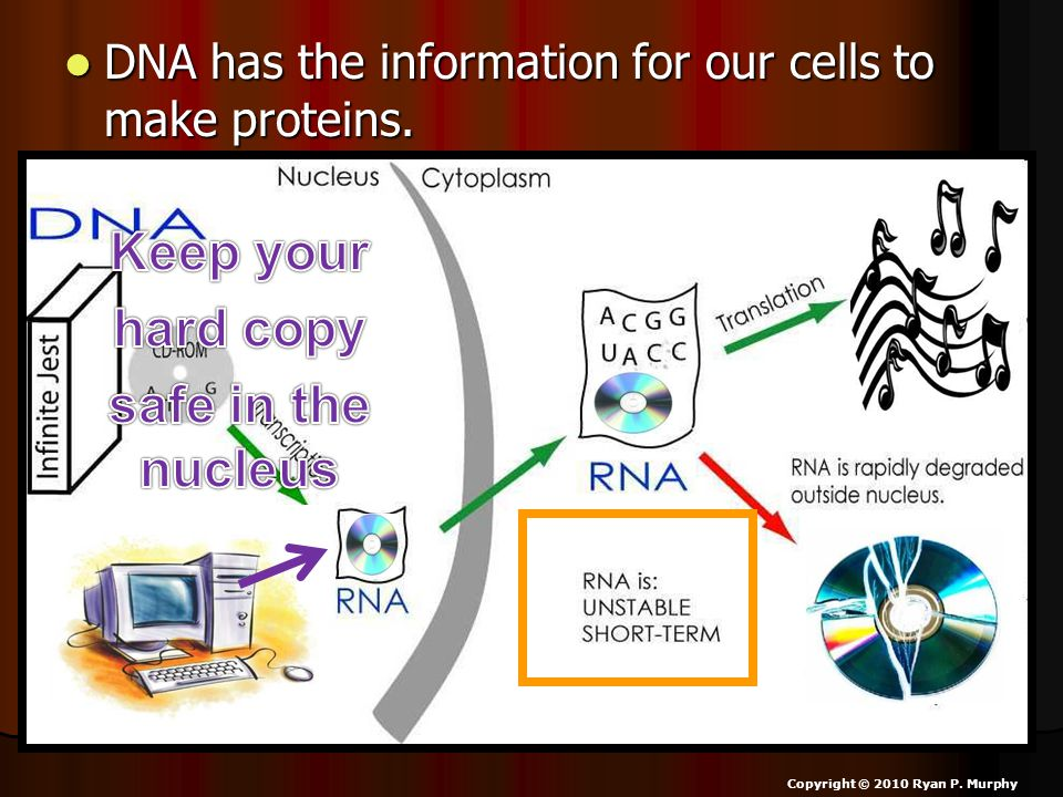 DNA has the information for our cells to make proteins.