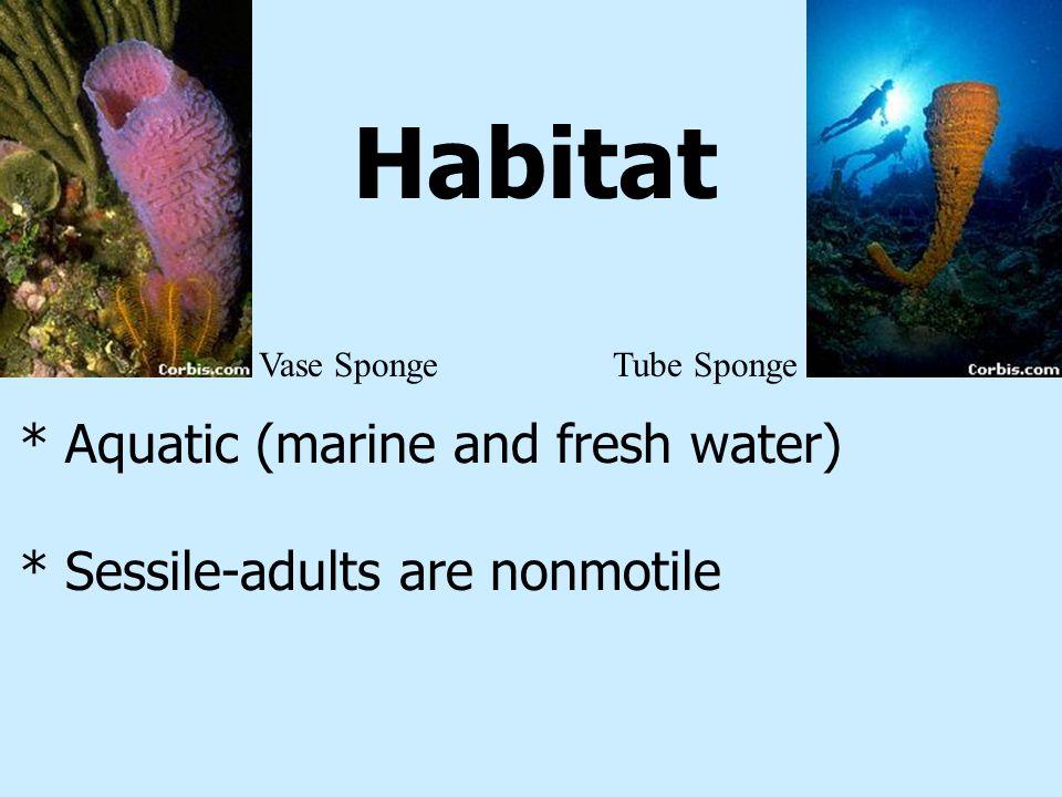 Habitat * Aquatic (marine and fresh water) * Sessile-adults are nonmotile Vase SpongeTube Sponge