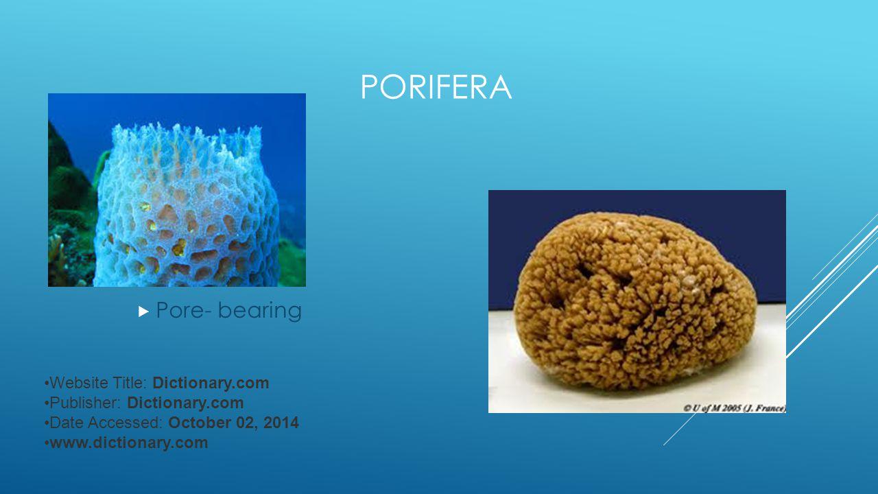 PORIFERA  Pore- bearing Website Title: Dictionary.com Publisher: Dictionary.com Date Accessed: October 02, 2014 www.dictionary.com