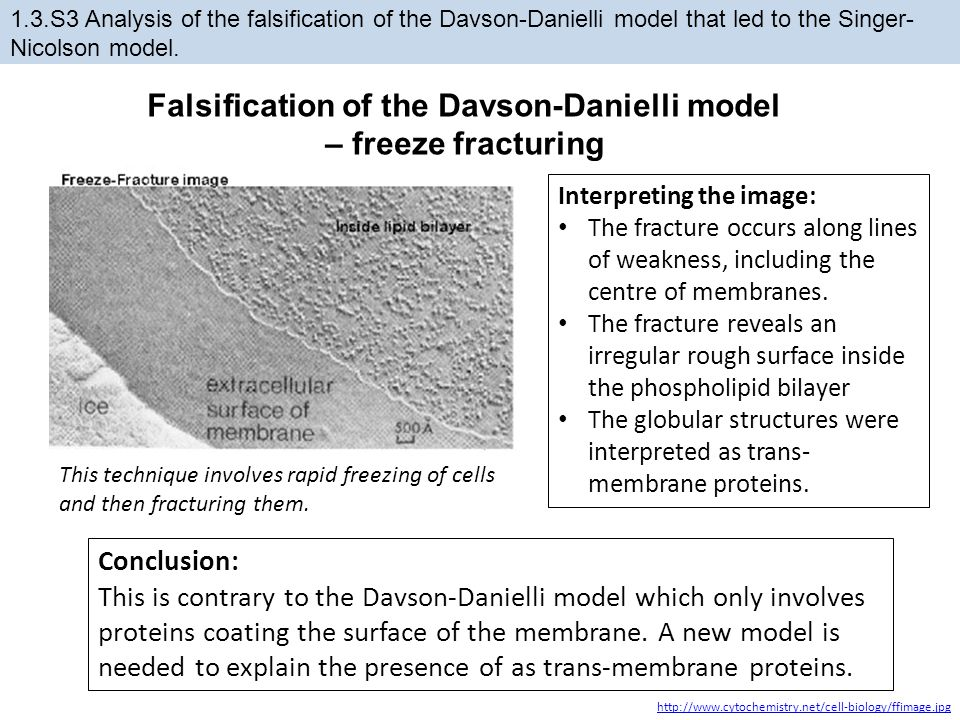 1.3.S3 Analysis of the falsification of the Davson-Danielli model that led to the Singer- Nicolson model. http://www.cytochemistry.net/cell-biology/ff