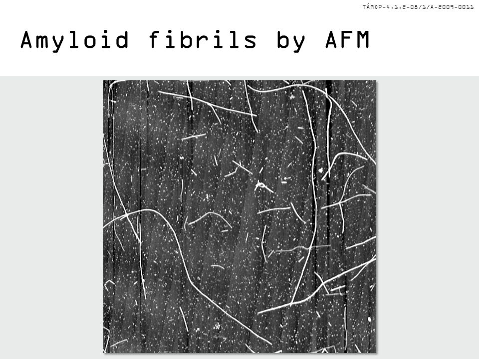 TÁMOP-4.1.2-08/1/A-2009-0011 Amyloid fibrils by AFM