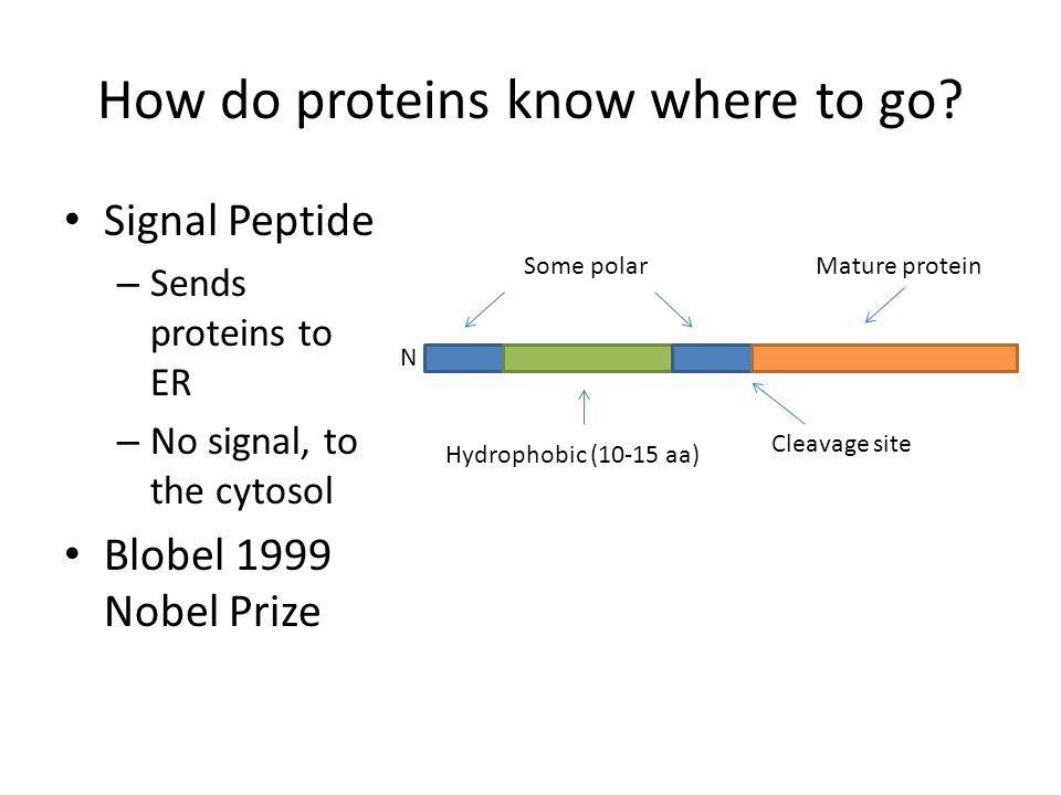 How do proteins know where to go.