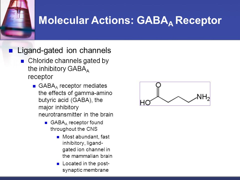 Molecular Actions: GABA A Receptor Ligand-gated ion channels Chloride channels gated by the inhibitory GABA A receptor GABA A receptor mediates the ef