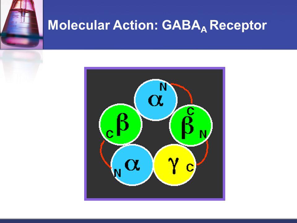 Molecular Action: GABA A Receptor