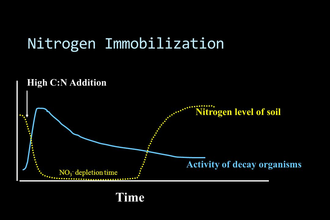 Nitrogen Immobilization NO 3 - depletion time Time Activity of decay organisms High C:N Addition Nitrogen level of soil