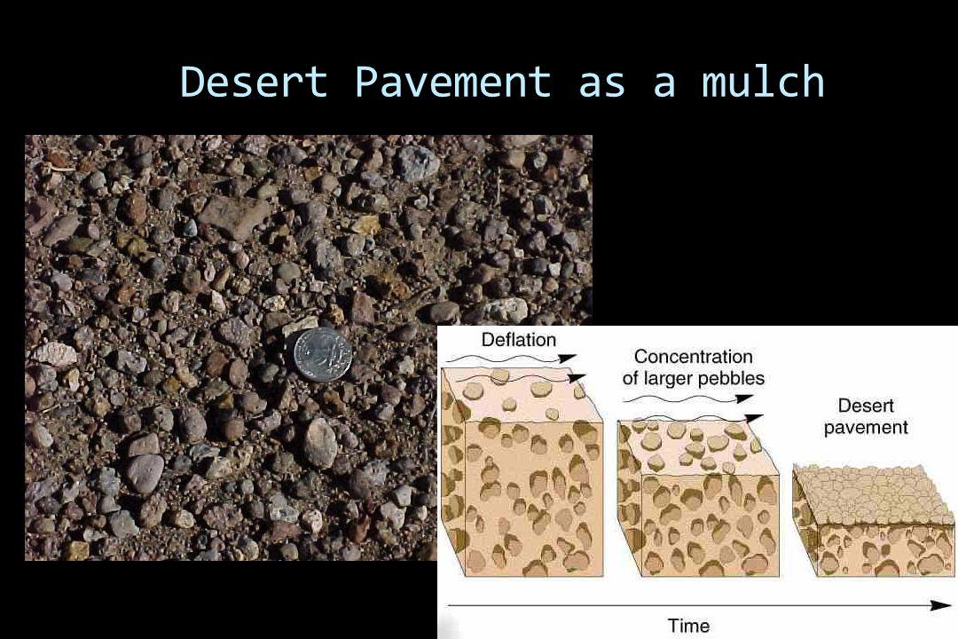 Desert Pavement as a mulch