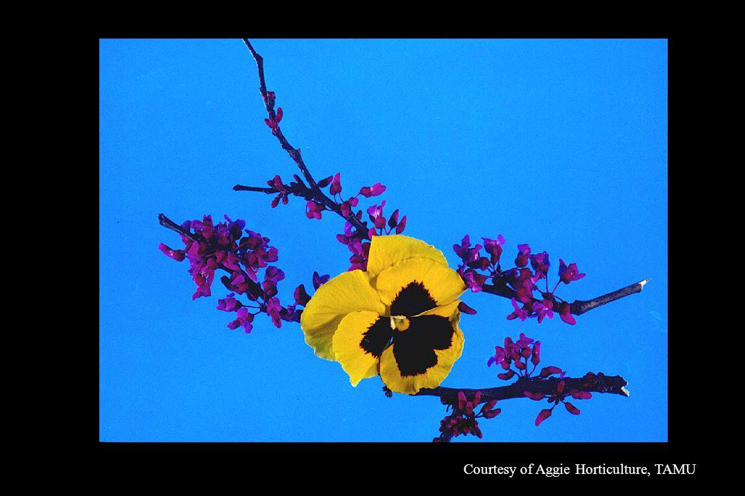 Courtesy of Aggie Horticulture, TAMU
