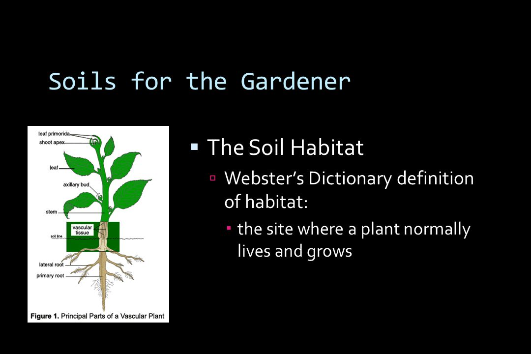 Soils for the Gardener  The Soil Habitat  Webster's Dictionary definition of habitat:  the site where a plant normally lives and grows