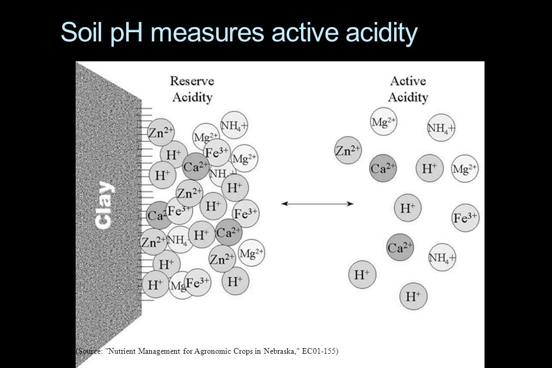Soil pH measures active acidity (Source: Nutrient Management for Agronomic Crops in Nebraska, EC01-155)