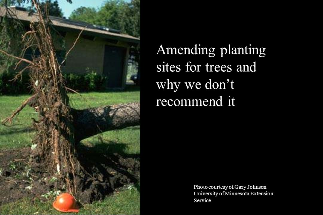 Photo courtesy of Gary Johnson University of Minnesota Extension Service Amending planting sites for trees and why we don't recommend it