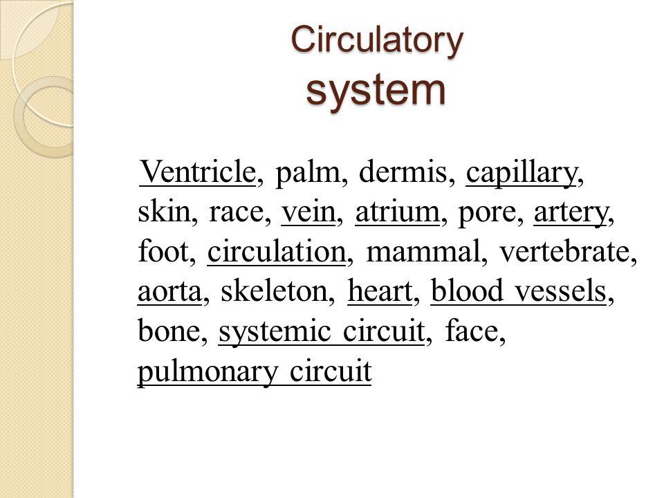 Circulatory system Ventricle, palm, dermis, capillary, skin, race, vein, atrium, pore, artery, foot, circulation, mammal, vertebrate, aorta, skeleton,