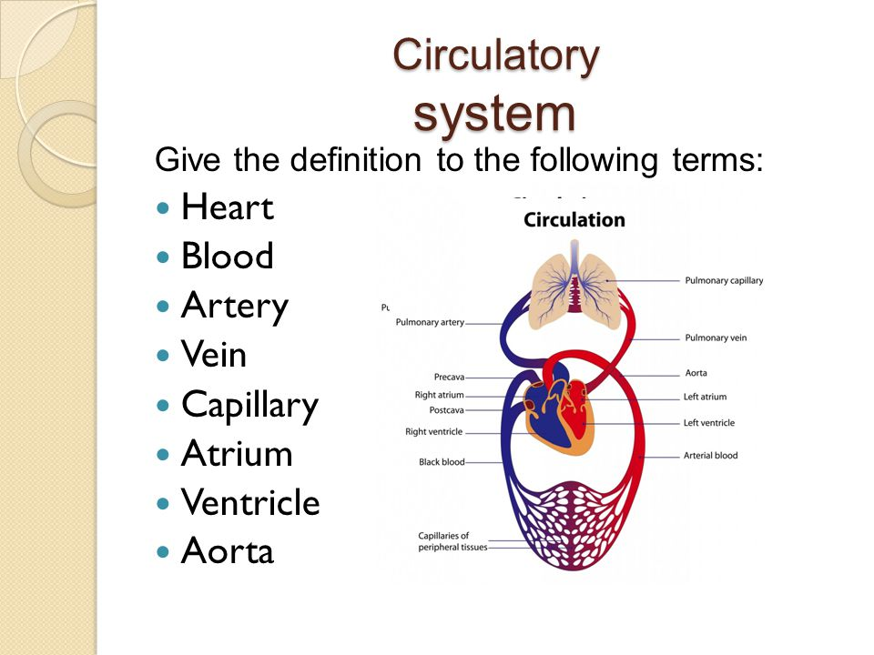 Circulatory system Give the definition to the following terms: Heart Blood Artery Vein Capillary Atrium Ventricle Aorta
