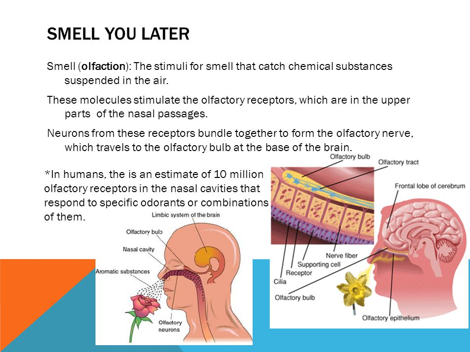 SMELL YOU LATER Smell (olfaction): The stimuli for smell that catch chemical substances suspended in the air.