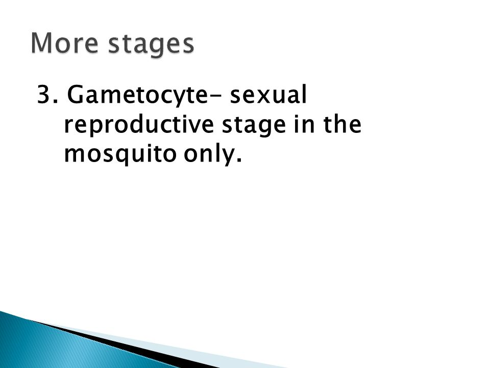 3. Gametocyte- sexual reproductive stage in the mosquito only.