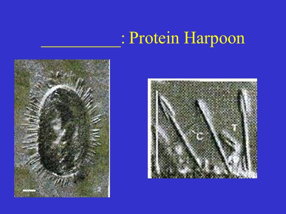 _________: Protein Harpoon