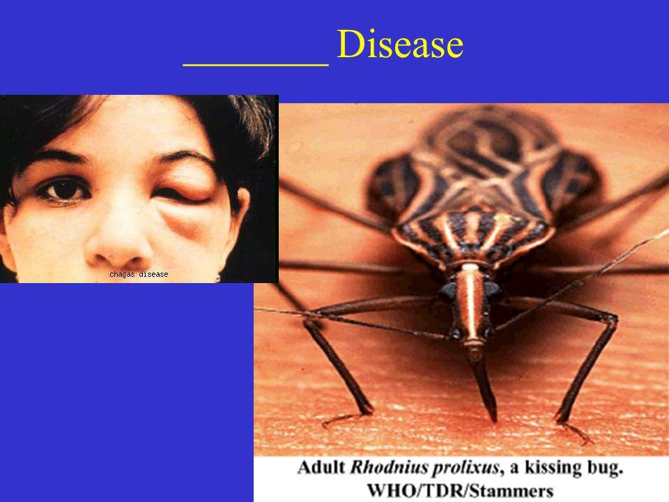 _______ Disease