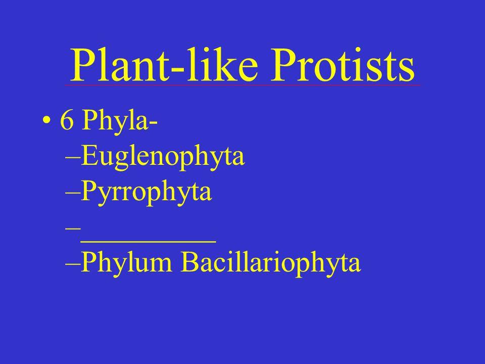 Plant-like Protists 6 Phyla- –Euglenophyta –Pyrrophyta –_________ –Phylum Bacillariophyta