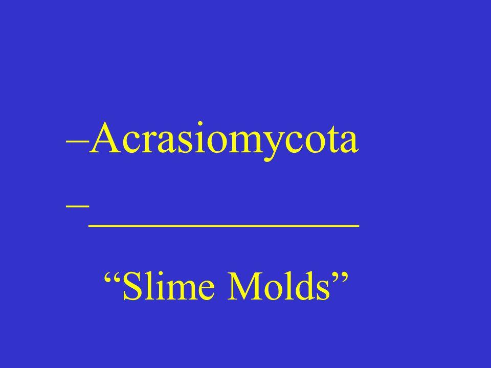 –Acrasiomycota –____________ Slime Molds
