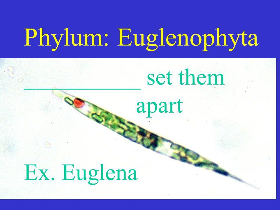 Phylum: Euglenophyta __________ set them apart Ex. Euglena