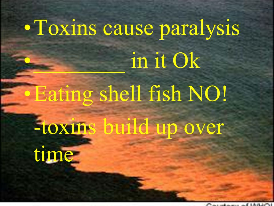 Toxins cause paralysis ________ in it Ok Eating shell fish NO! -toxins build up over time