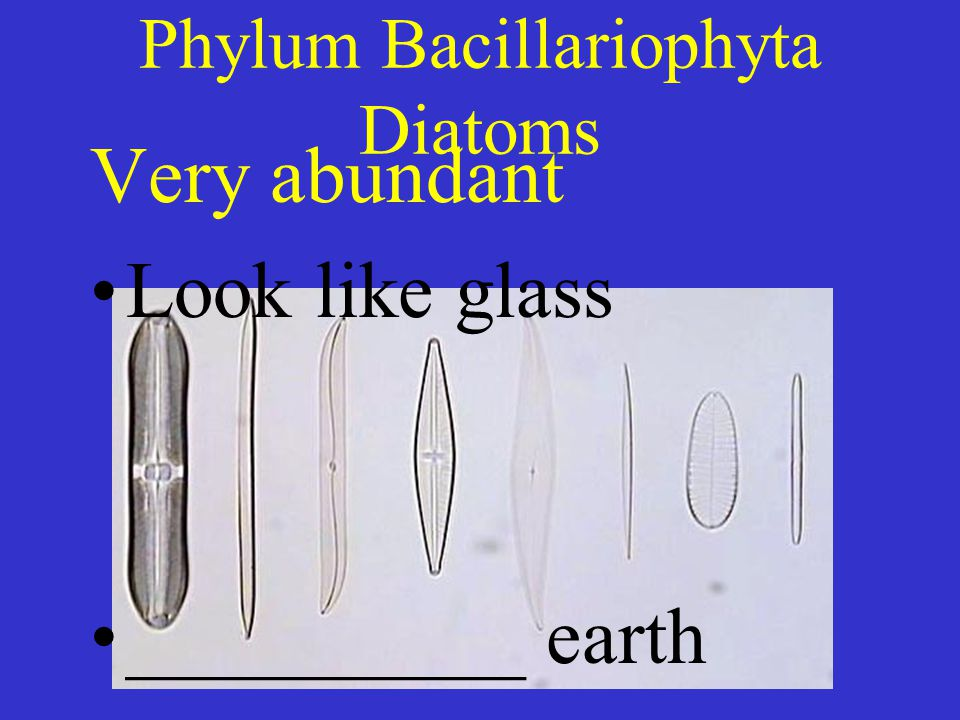 Phylum Bacillariophyta Diatoms Very abundant Look like glass __________ earth