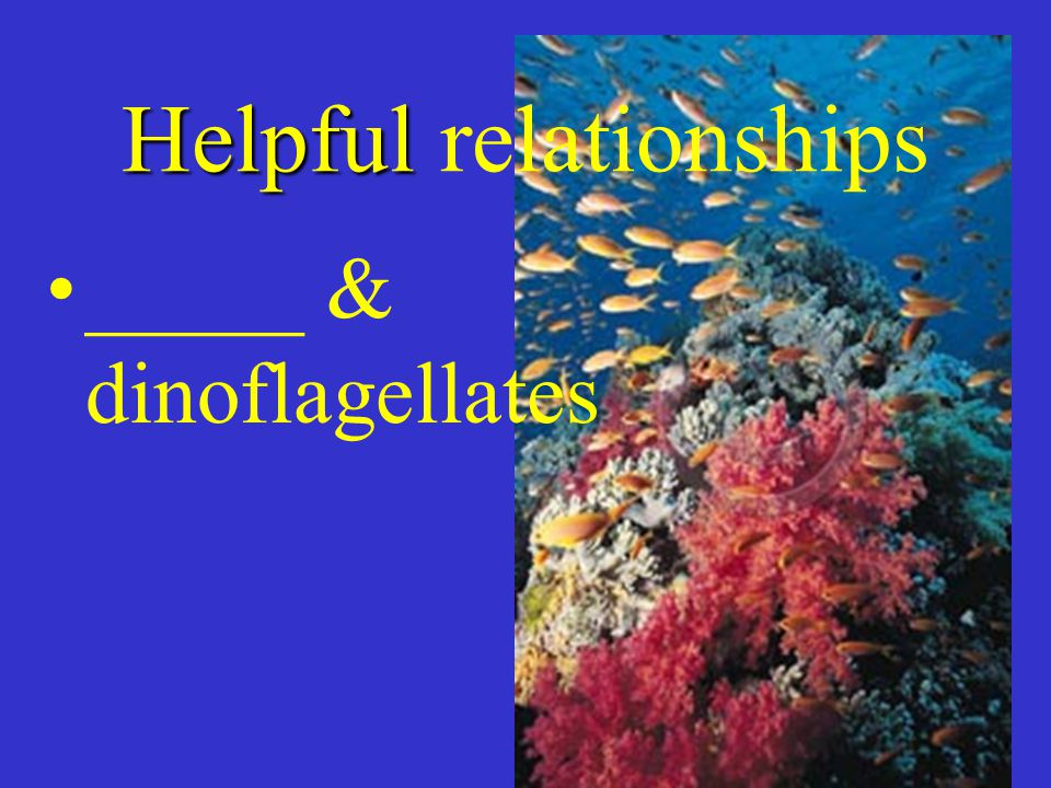 Helpful Helpful relationships _____ & dinoflagellates