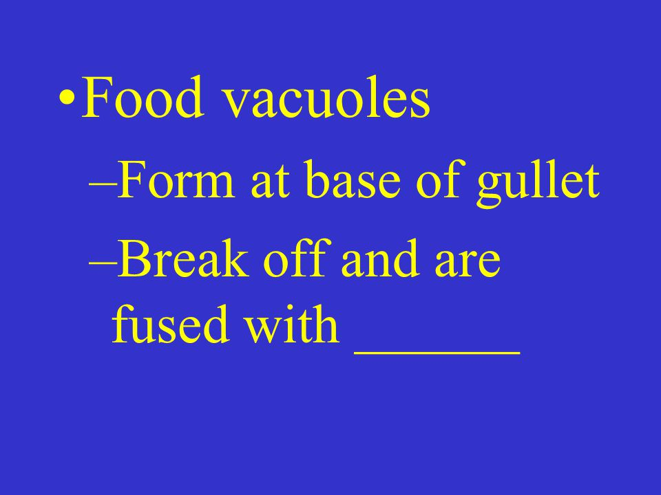 Food vacuoles –Form at base of gullet –Break off and are fused with ______