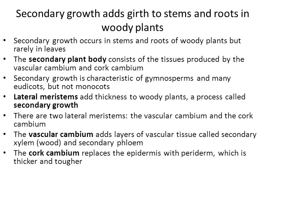 Secondary growth adds girth to stems and roots in woody plants Secondary growth occurs in stems and roots of woody plants but rarely in leaves The sec